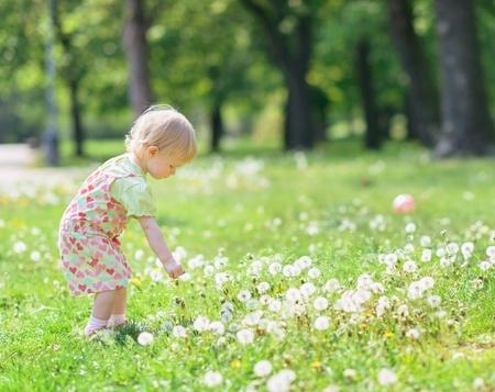 Baby gathering dandelions in park Stock Photo - 13611608