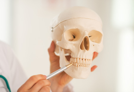 Closeup on medical doctor woman showing pointing on teeth of human skull photo