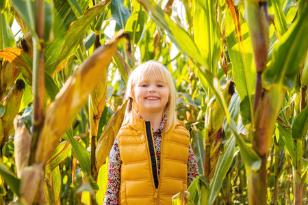 staying: Little smiling blond kid in yellow west staying in a corn field on farm during the autumn season Stock Photo