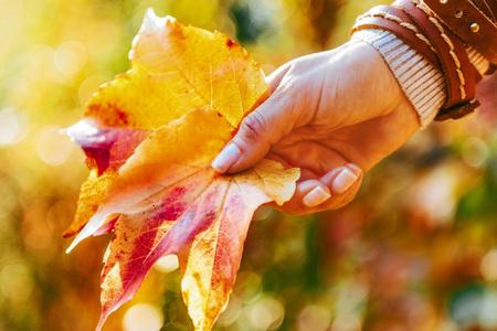 가을 잎을 들고 여자에 근접 촬영 스톡 콘텐츠