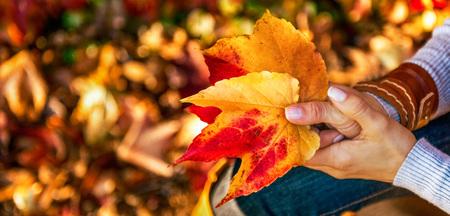 가을 잎을 들고 여자에 근접 촬영 스톡 콘텐츠 - 83771558