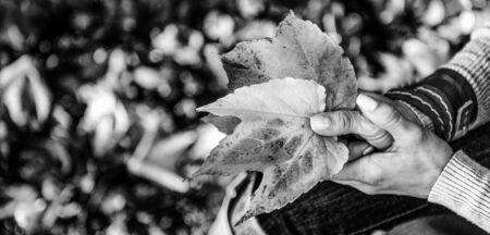 가을 잎을 들고 여자에 근접 촬영 스톡 콘텐츠 - 84435231