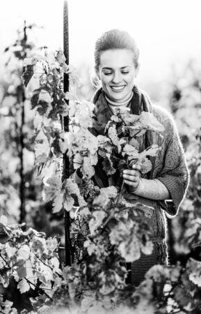 가을 포도원에서 서서 지점에 찾고 행복 젊은 여자