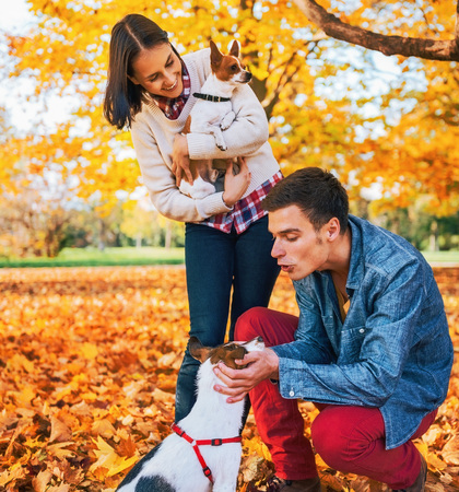 Young couple playing with dogs outdoors in autumn