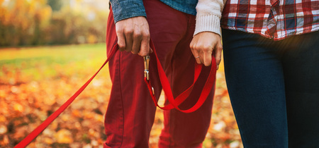 Close up on two hands of romantic couple holding dogs lead outside in autumn day Stock Photo