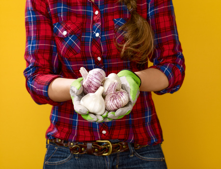 Healthy food to your table. Closeup on young woman farmer in checkered shirt isolated on yellow showing garlic