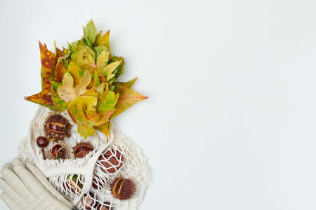 Hello november. autumn flat lay with leaves, chestnuts and piggy bank on white background. Stock fotó