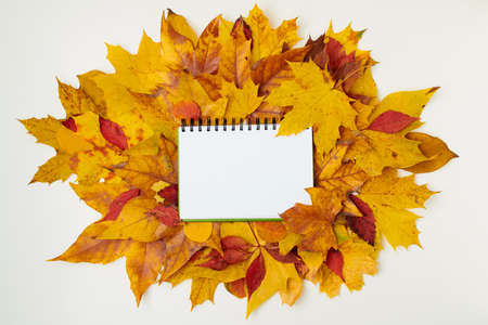 Hello autumn. autumn background with donation inscription and leaves on white background.