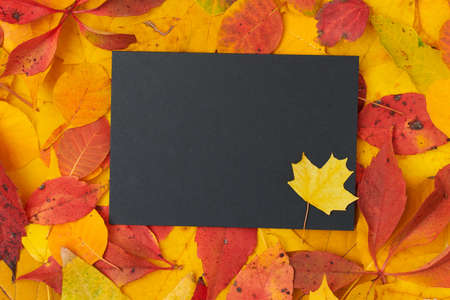 Hello september. autumn background with chalk, cloud shape blackboard and leaves on white background.