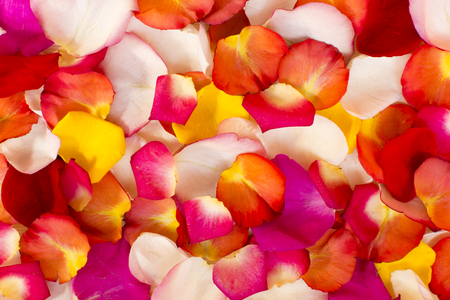 Variegated rose petals for the background.