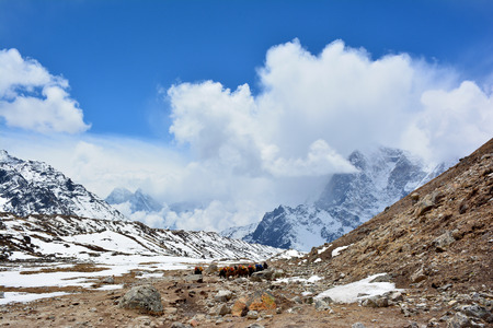 Beautiful Himalayan mountains on the background.
