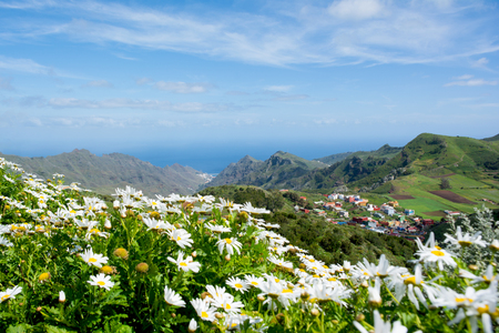 Beautiful view on Anaga Mountains rural park from the Mirador de Jardina. Camomile flowers on the foreground. Tenerife, Canary Islands.