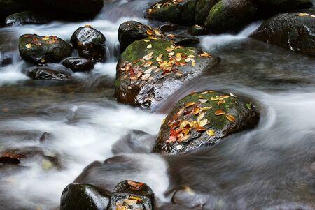 石の落とされた葉およびストリーム