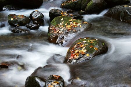 Stone fallen leaves and stream
