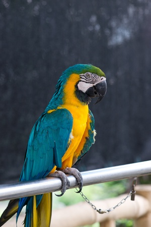 Macaw sitting on a steel pipe photo