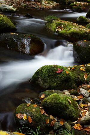 Fallen leaves and stream Stock Photo - 10299533
