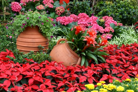 Flowerbed with gallipot Stock Photo