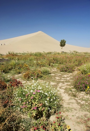Tree flower nursery and sand dune in gansu of china photo