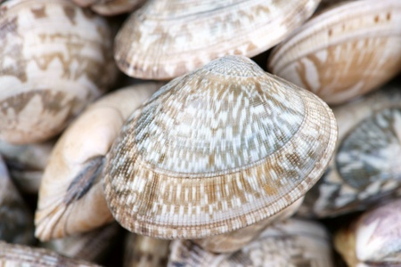 oyster shell: Oyster shell background