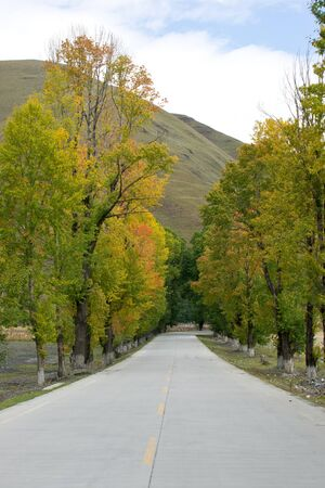 Road with tree in autumn