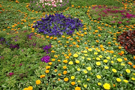 Colorful flowerbed photo
