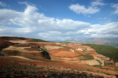 wild oats: Colorful farmland in dongchuan of china