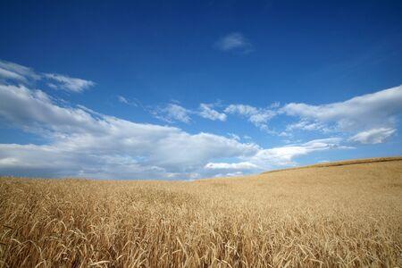 Highland barley farmland,dongchuan,yunnan,china photo