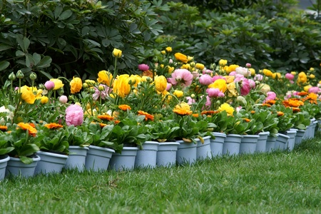 flowerpot with lawn photo