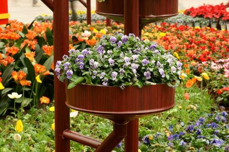 massif de fleurs: Franges iris herbe parterre