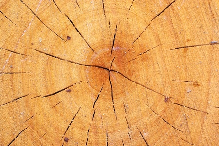 crazed: Wood with growth ring Stock Photo