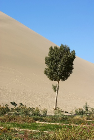desertification: Tree flower nursery and sand dune Stock Photo