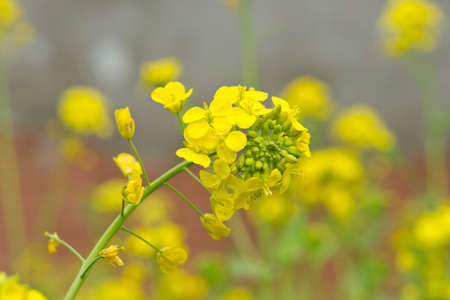 cole: cole flowers