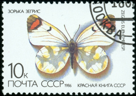 republics: UNION OF SOVIET SOCIALIST REPUBLICS - CIRCA 1986  a 10 kopec stamp from the USSR  Scott 2008 catalog number 5437  shows image of a sooty orange tip butterfly  Zegris eupheme , circa 1986