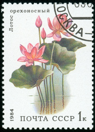 UNION OF SOVIET SOCIALIST REPUBLICS - CIRCA 1984  a stamp from the USSR  Scott 2008 catalog no  5251  shows a lotus flower, from the aquatic plants series, circa 1984 Stock Photo