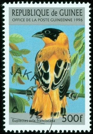guinee: GUINEE - CIRCA 1996  stamp printed by GUINEE, shows bird eulectes orix franciscana , circa 1996