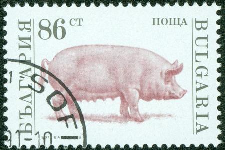 BULGARIA-CIRCA 1991  A stamp printed in the Bulgaria shows a pig, circa 1991