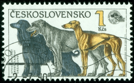 CZECHOSLOVAKIA - CIRCA 1990  A stamp printed in Czechoslovakia shows Afghan Greyhound, Irish Wolfhound and English Greyhound, circa 1990 Stock Photo - 13760893