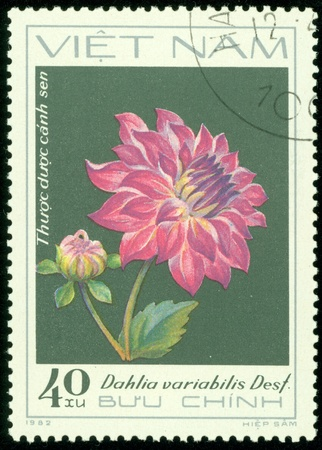 VIETNAM - CIRCA 1982  A stamp printed in Vietnam shows violet dahlia, series devoted to dahlias, circa 1982 Stock Photo - 13760909
