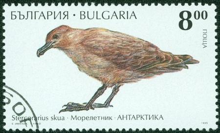BULGARIA - CIRCA 1995  A stamp printed in BULGARIA shows bird  Great Skua  , circa 1995