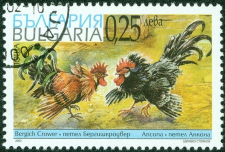 BULGARIA - CIRCA 2002  A stamp printed in Bulgaria shows image of two cocks fighting, circa 2002