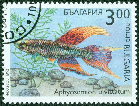 philatelic: BULGARIA - CIRCA 1993  A stamp printed in Bulgaria shows a fish, circa 1993 Stock Photo