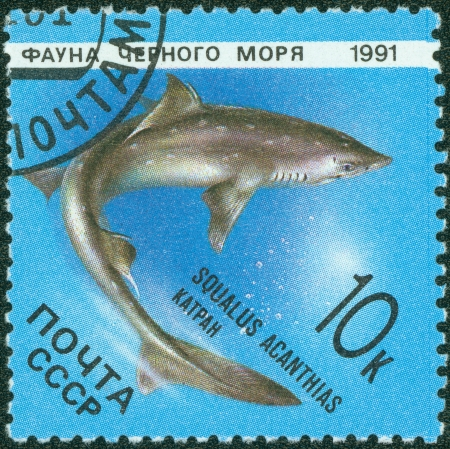 RUSSIA - CIRCA 1991  stamp printed by Russia, shows Marine Life, Squalus acanthias, circa 1991  photo