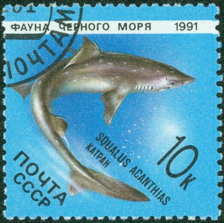 RUSSIA - CIRCA 1991  stamp printed by Russia, shows Marine Life, Squalus acanthias, circa 1991  photo