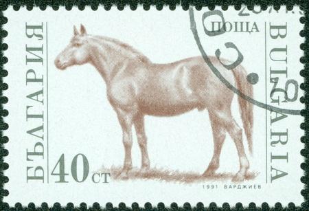 BULGARIA - CIRCA 1991  A stamp printed in Bulgaria shows horse, circa 1991 Stock Photo - 13837879