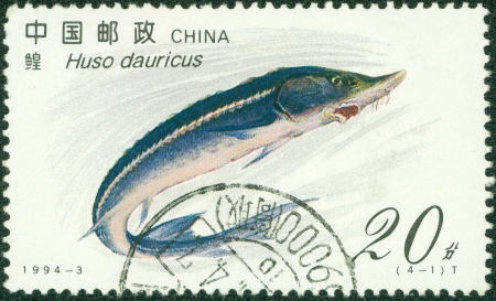 CHINA - CIRCA 1994  A stamp printed in CHINA shows a fish huso dauricus , circa 1994