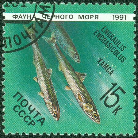 anchovy: USSR - CIRCA 1991  A Stamp printed in the USSR shows an image of the European anchovy, Engraulis encrasicolus, circa 1991