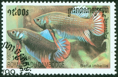 CAMBODIA - CIRCA 1999  A stamp printed in CAMBODIA shows fish, circa 1999 photo