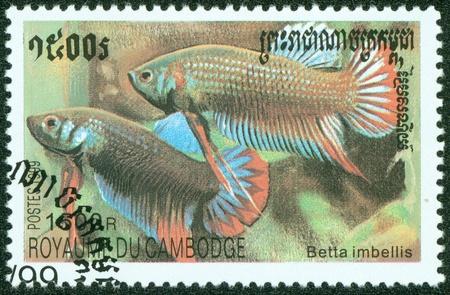 betta: CAMBODIA - CIRCA 1999  A stamp printed in CAMBODIA shows fish, circa 1999