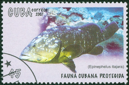 epinephelus: CUBA - CIRCA 2007  A stamp printed in Cuba shows a grouper fish, circa 2007