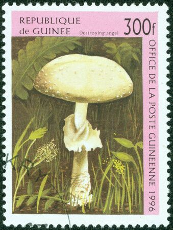 photo of object s: GUINEA - CIRCA 1996  A stamp printed in Guinea shows a Destroying Angel mushroom, Amanita virosa, Amanita ocreata, or Amanita verna  One of the most poisonous mushrooms known, circa 1996  Stock Photo